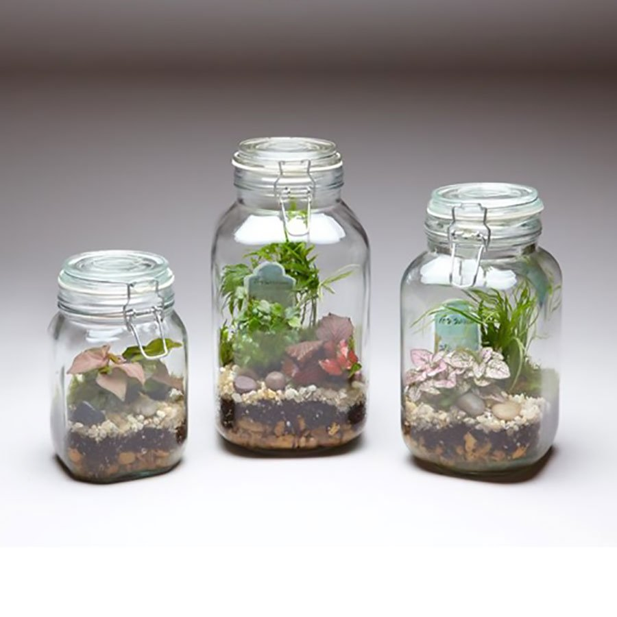 Tall Mason Jar Terrarium East Coast Tropicals Delivering The Tropics